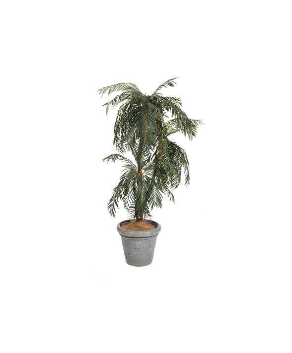 Palmboom Phoenix 180 cm hoog