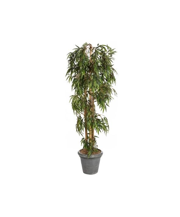 Planten jk partyverhuur for Bamboe plant