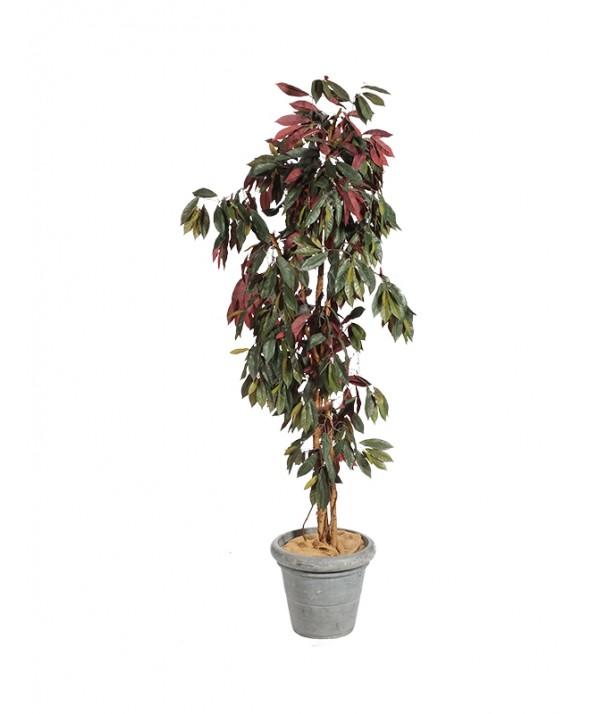 Capencia rood 180 cm hoog